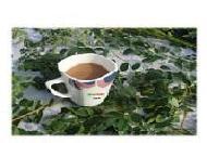 Moringa Tea Manufacturers