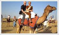 Camel Safari Tours